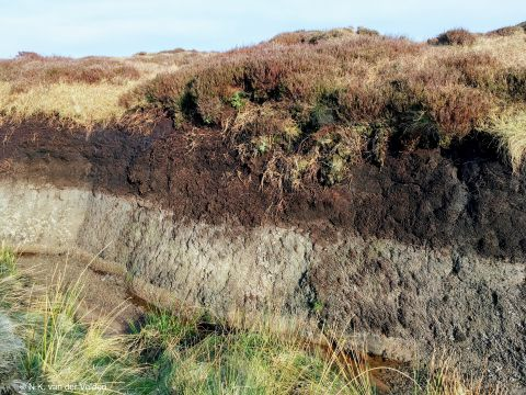 View of soil horizons in landscape showing top layer of peat mixing with lower layers of stone