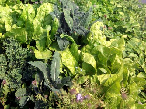 Delightful Bio Intensive Gardening